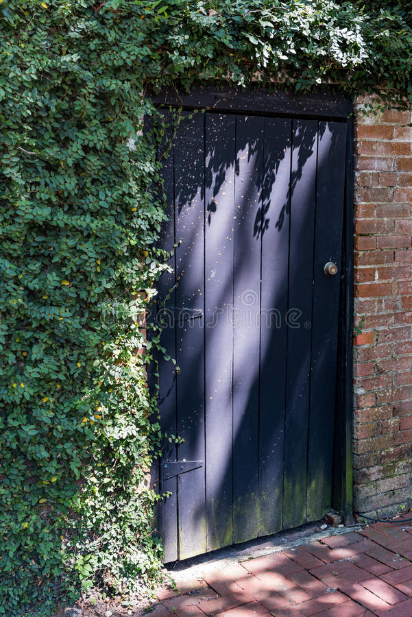 Purple door in brick wall covered with ivy. Door is rustic and weathered on the bottom and sun is casting shadows across the door royalty free stock photo