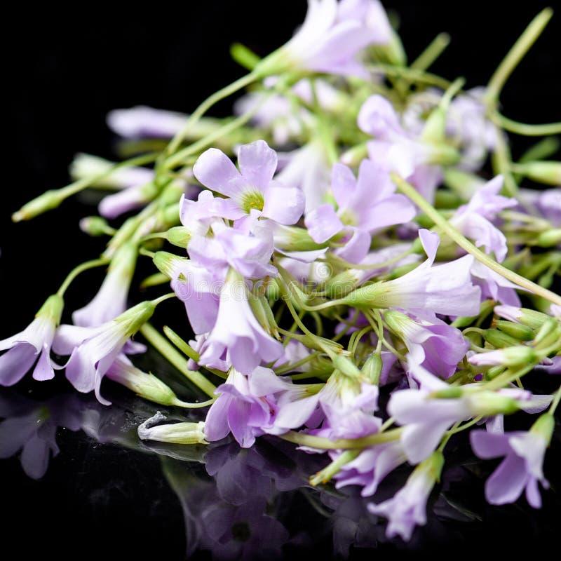Purple edible flowers stock photography