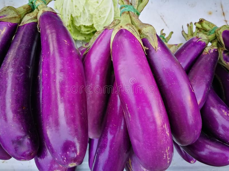 Purple Eggplant. Eggplant for the chef cook royalty free stock images