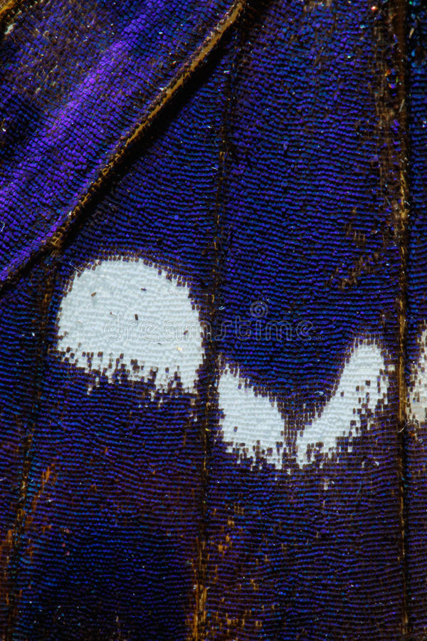 Purple Emperor, Apatura iris butterfly wing pattern. Detail of Purple Emperor, Apatura iris butterfly wing pattern stock images