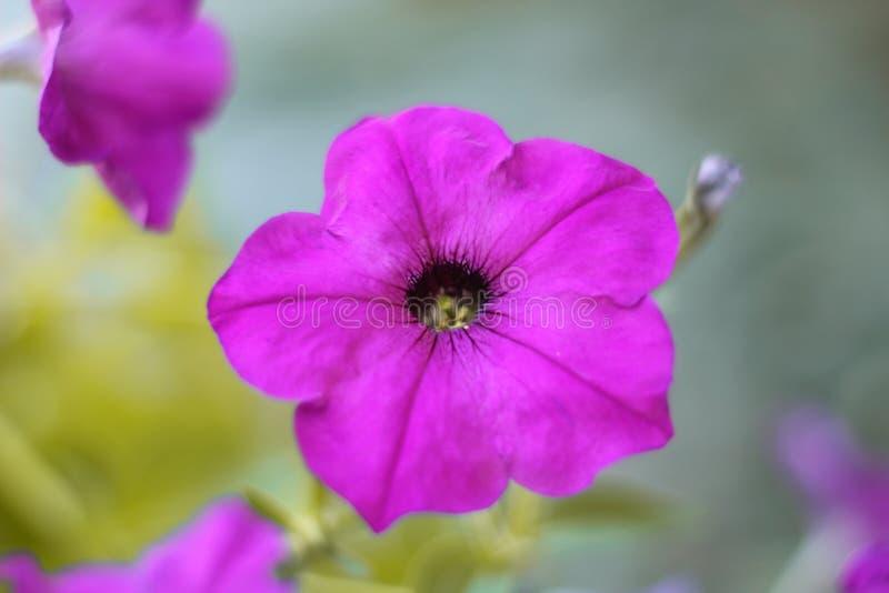 Purple en van voiletkleuren bloemen royalty-vrije stock afbeeldingen