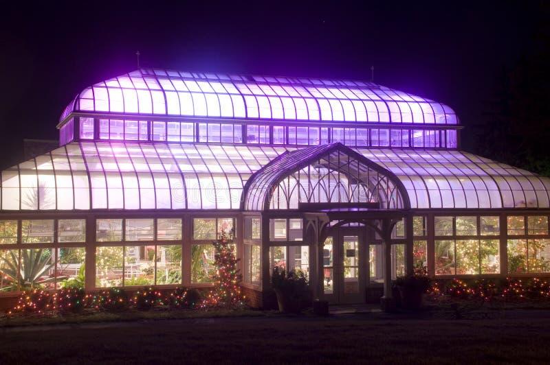 purple för grönt hus royaltyfri bild