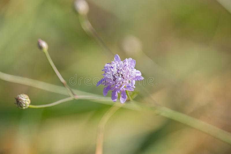 Purple field flowers on sunset. On summer in the garden royalty free stock photography