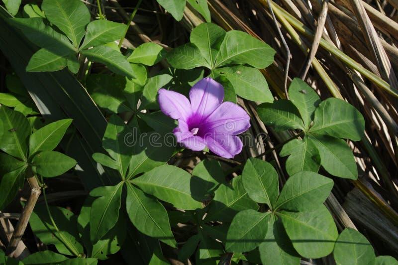 Purple Flower Free Public Domain Cc0 Image