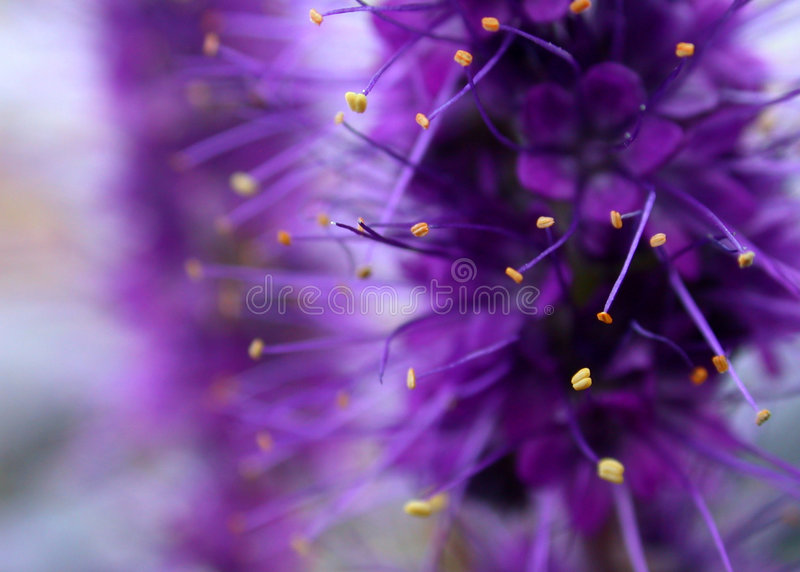 Download Purple Flower Background stock image. Image of color, purple - 43405