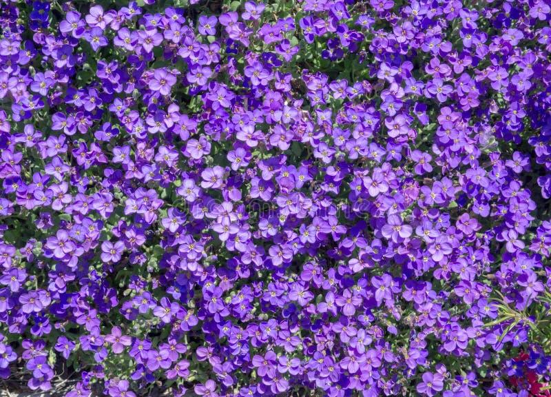 Purple Flower Background Images 70872 USBDATA