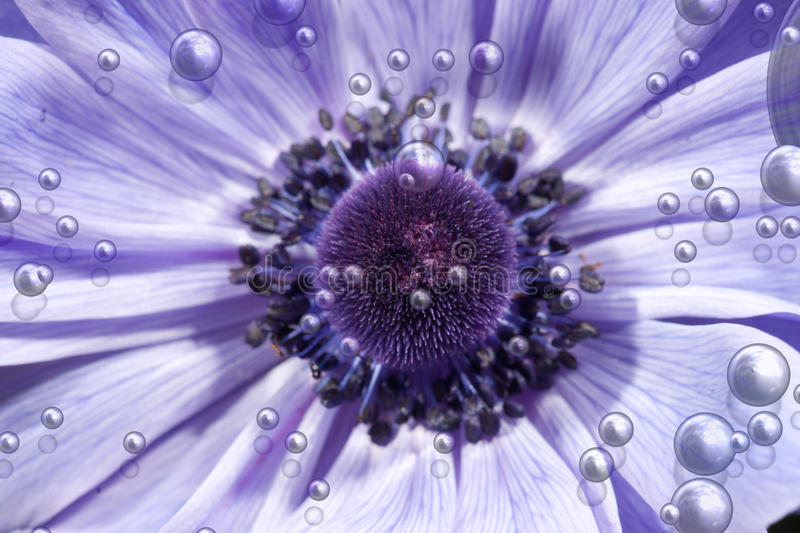 Purple flower with bubbles. Great image of a beautiful purple flower with bubbles royalty free stock photo