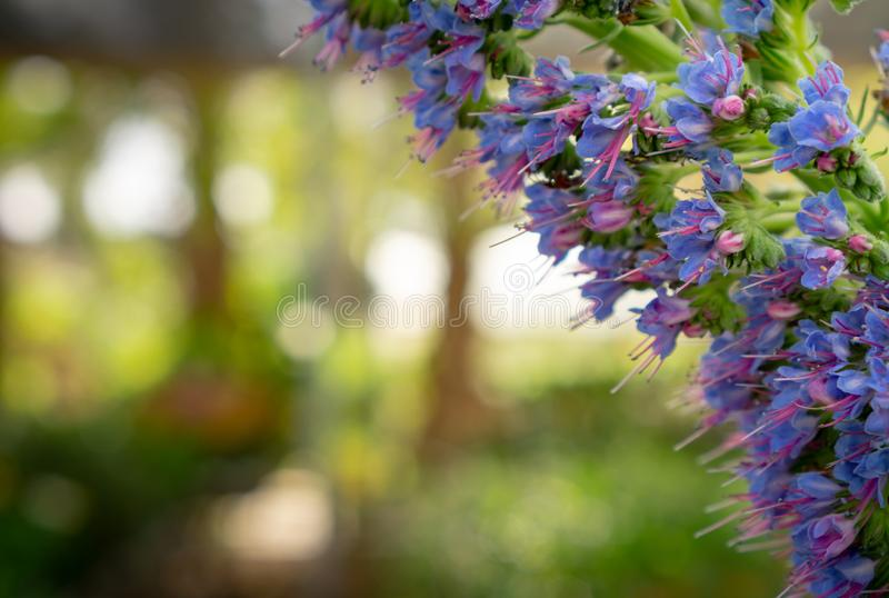 Purple fower cluster with bokeh background royalty free stock photography