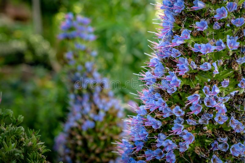 Purple fower cluster with bokeh background stock photography