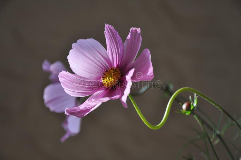 Purple Flower during Daytime royalty free stock photos