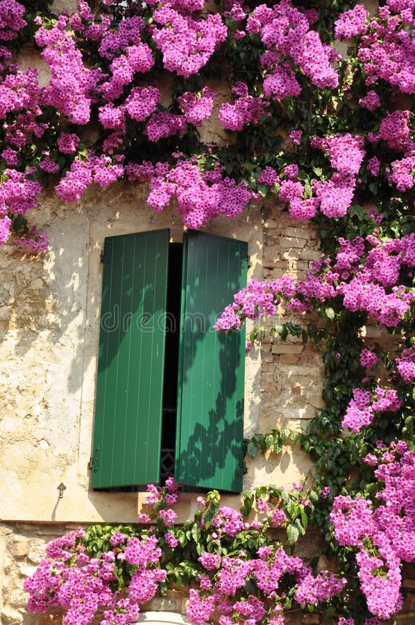 Purple flower on the facade of the building stock photography