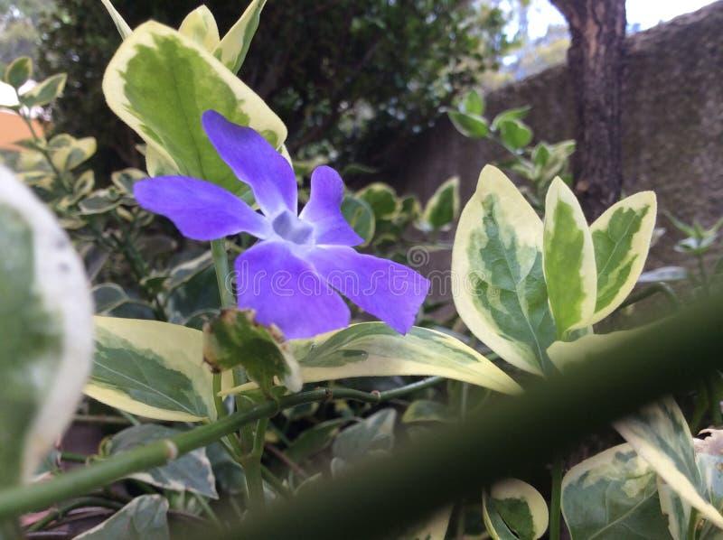 Purple flower in garden stock photos