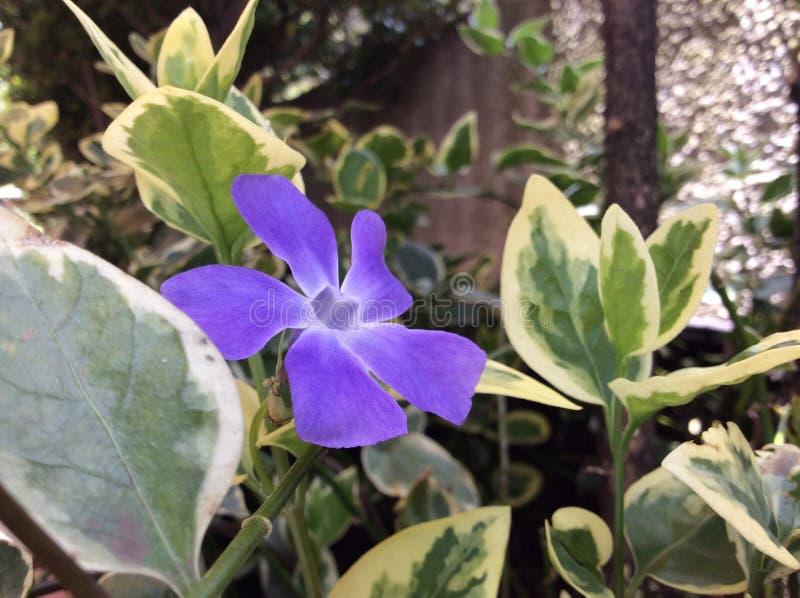 Purple flower in garden stock images