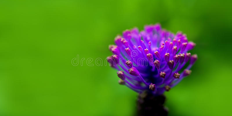 Purple flower stock photography