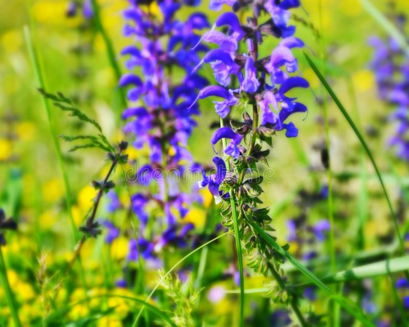 Purple flower in green countries stock images