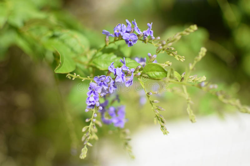 Purple flower green leaves plants stock photos