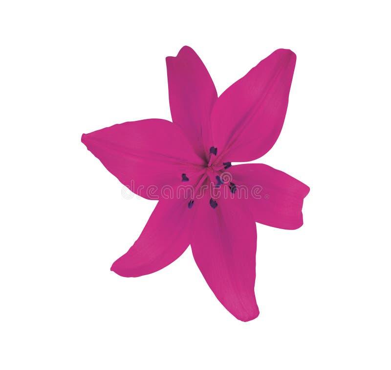Purple flower isolated on white stock photo