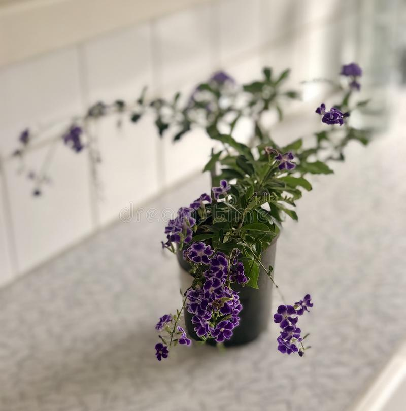 Purple flower love stock photo