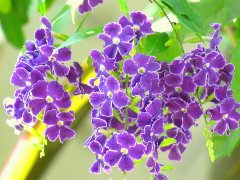 Purple And Blue Flower Names