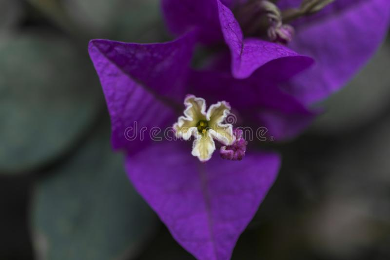 Purple flower. Macro photography, with green background royalty free stock photography