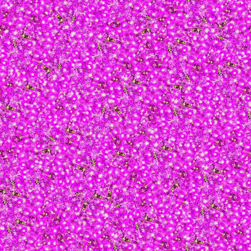 Purple Flower Seamless Pattern Royalty Free Stock Photos