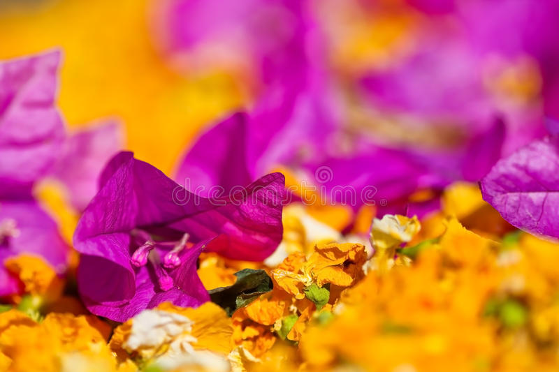 Download Purple Flower With Shallow Dept Of Field Stock Image - Image of botany, beautiful: 28468441