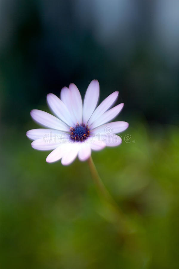 Purple flower with soft focus stock images