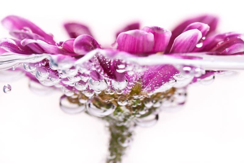 Purple flower in water. Macro of purple flower in water stock photo