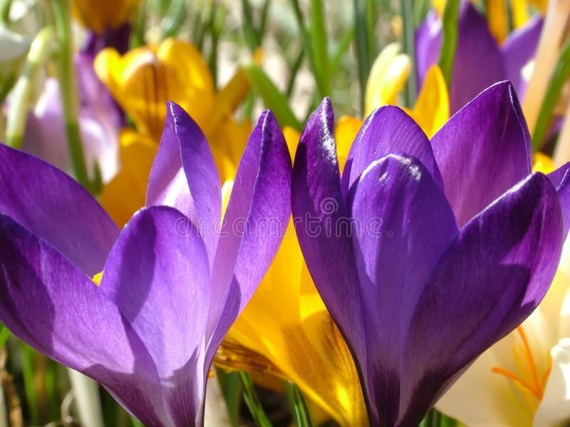 Purple Flower And Yellow Flower During Daytime In Close Photography Free Public Domain Cc0 Image