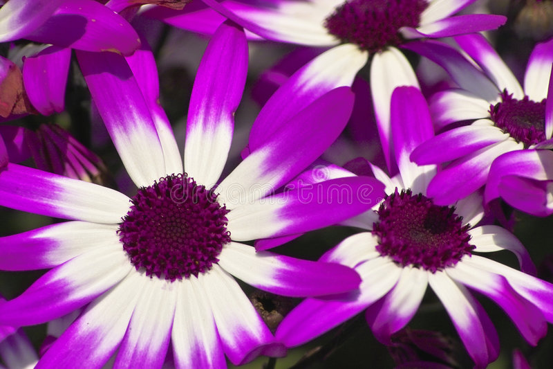 Download Purple Flowers stock photo. Image of floral, purple, springtime - 1423440
