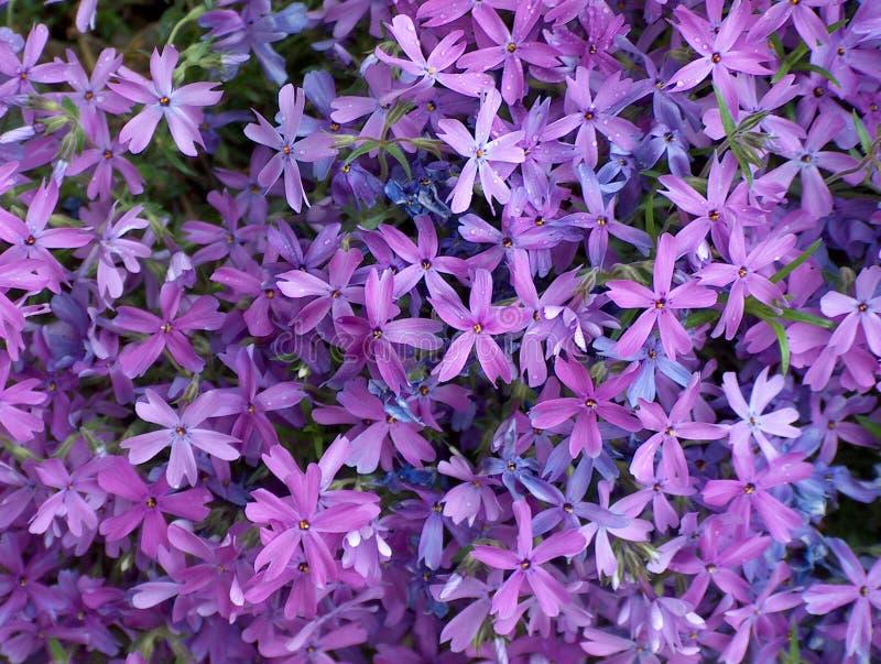 Download Purple flowers stock image. Image of flower, multitude, petals - 22401