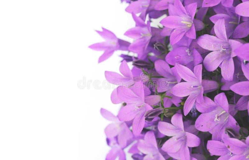 Purple flowers royalty free stock photos