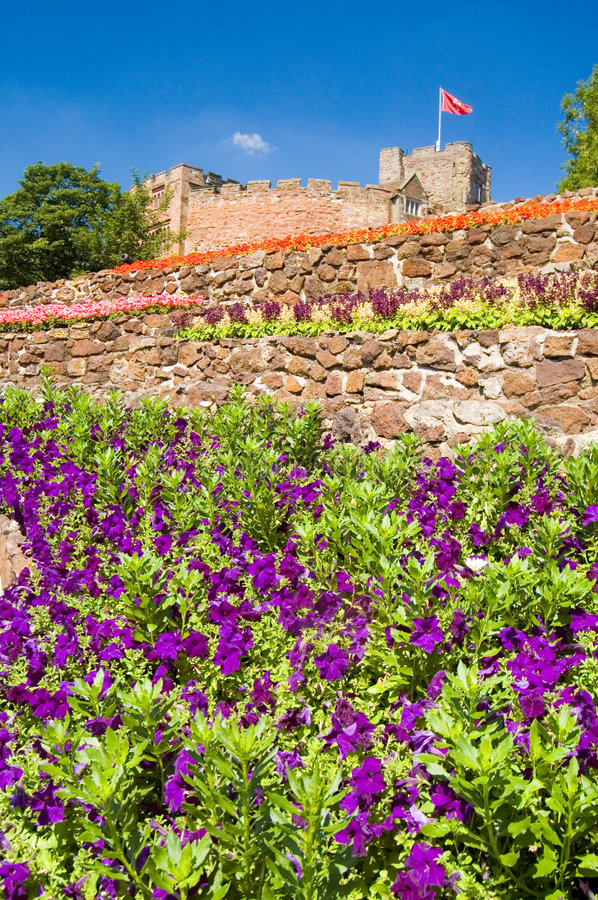 Free Purple Flowers And Castle Stock Photography - 1034632