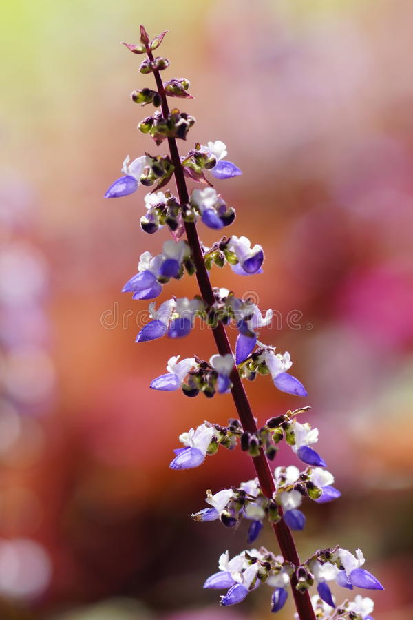 Purple flowers. For background or wallpaper stock images