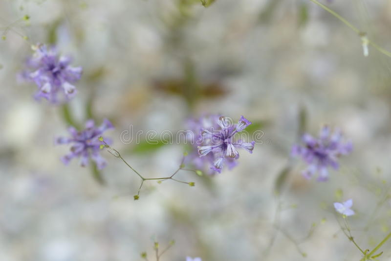 Purple flowers. For background or wallpaper stock photography