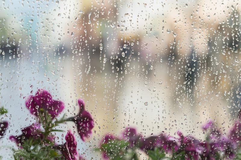 Purple flowers behind the wet window with rain drops, blurred street bokeh. Concept of spring weather, seasons, modern stock image