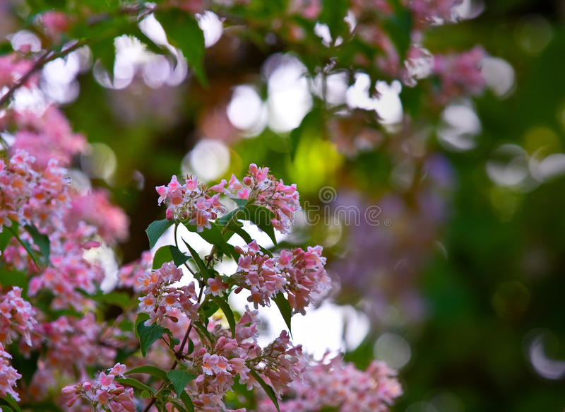 Purple flowers in bloom stock image