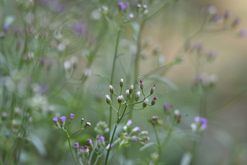 Purple flowers in the garden stock image