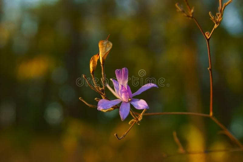 Purple flowers are blooming under autumn sun stock images