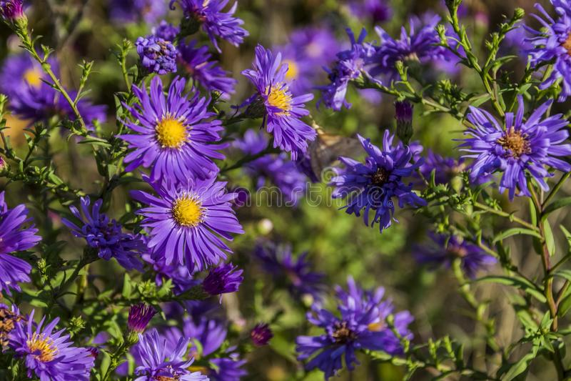 Purple  flowers. Purple flowers on a blurry green background royalty free stock photos
