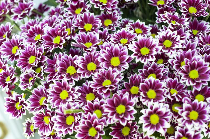Purple flowers bunch. Beautiful bouquet of purple and white flowers with yellow center royalty free stock image
