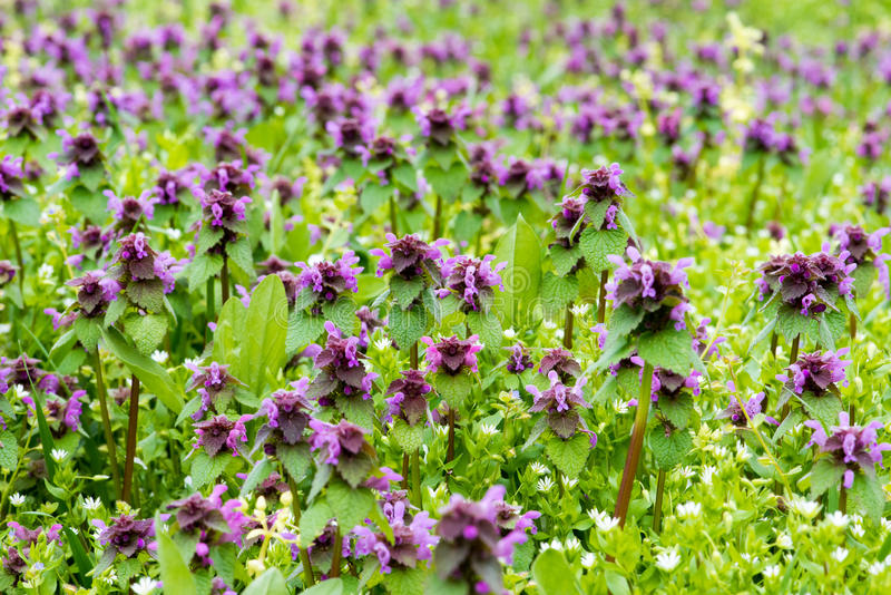 Download Purple flowers stock image. Image of green, flower, abstract - 83701263