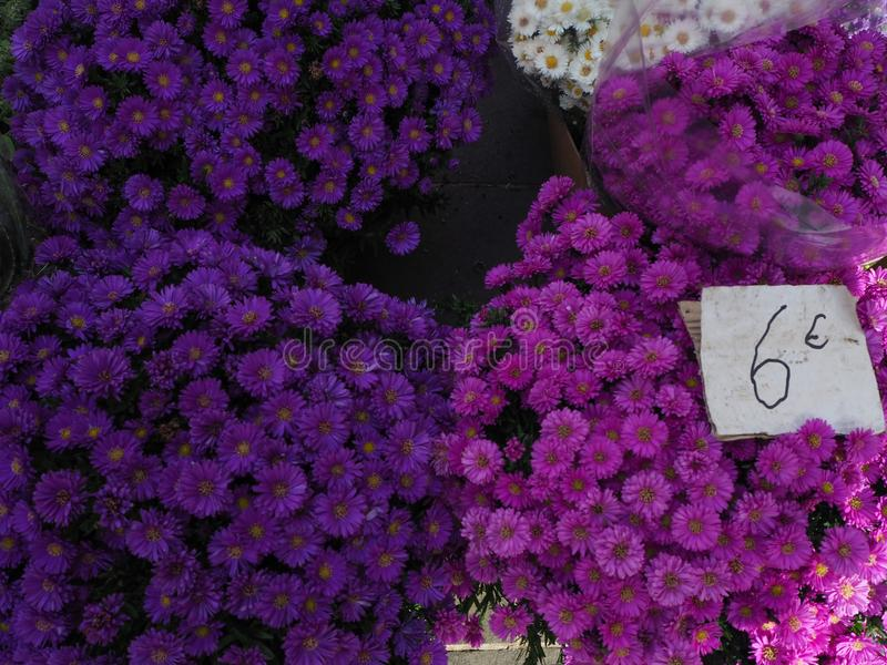 Purple Flowers in the Flower Market in Nice, France. Purple Flowers for sale in the Flower Market in Nice, France stock images