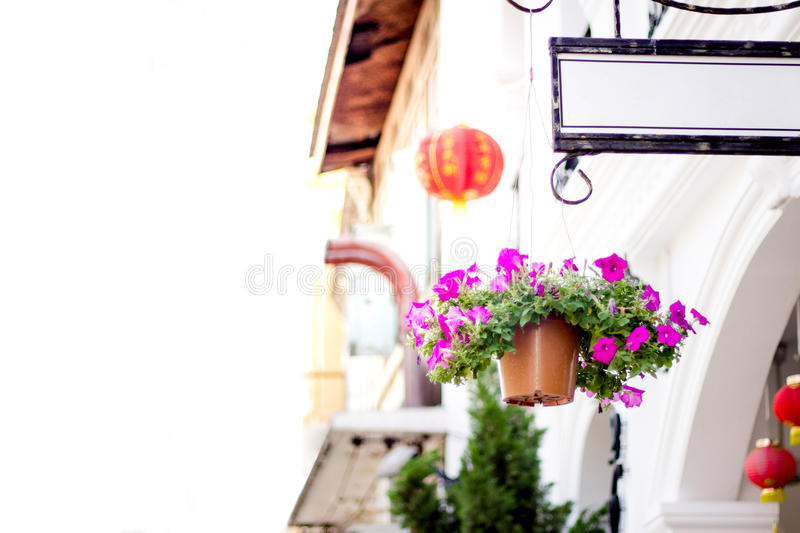 Purple flowers in flowerpot and Sino-Portuguese house style in Phuket Thailand stock photography