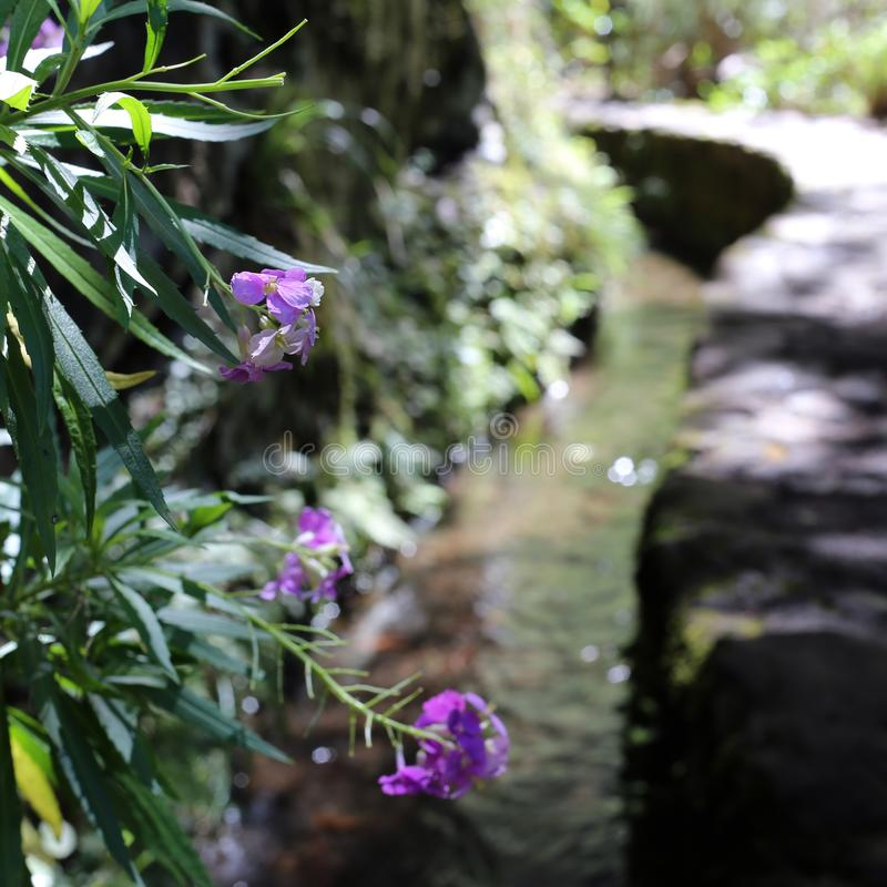 Purple Flowers and Flowing Levada Water Photographed in Madeira during a Sunny Spring Day stock photo
