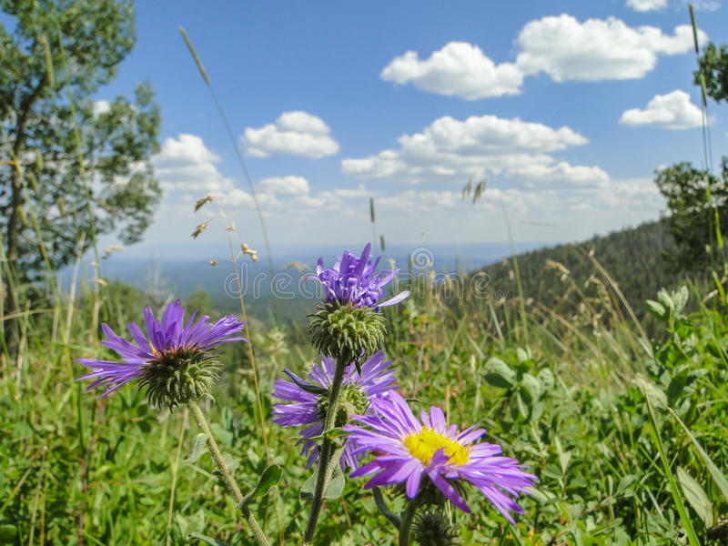 Purple flowers in front of mountain view stock photos