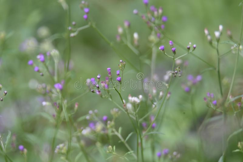 Purple flowers in the garden royalty free stock photos