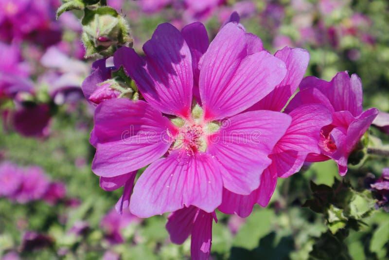 Purple flowers garden stock image