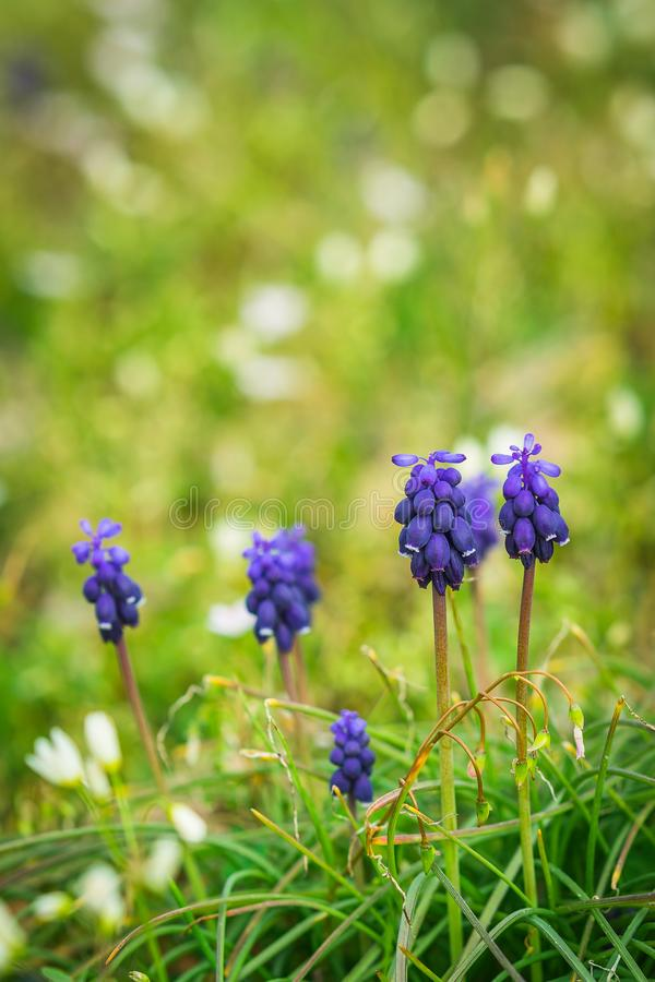 Purple Flowers in Grass stock images