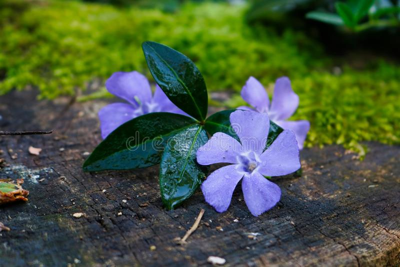 Purple flowers on a brown surface stock photos